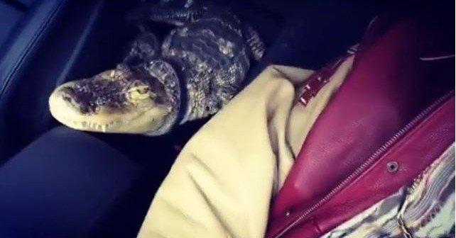 Bonez MCs Haustier: Wieviel kostet so ein Krokodil?