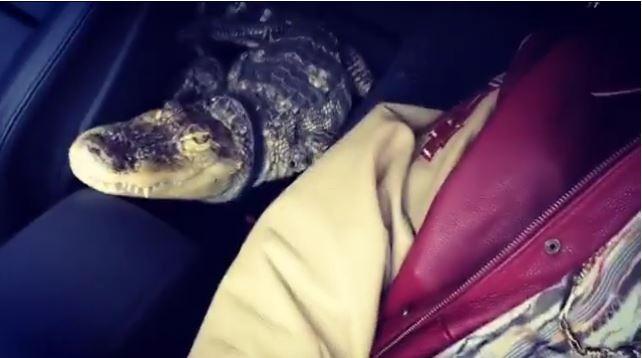 Bonez MC mit seinem Krokodil